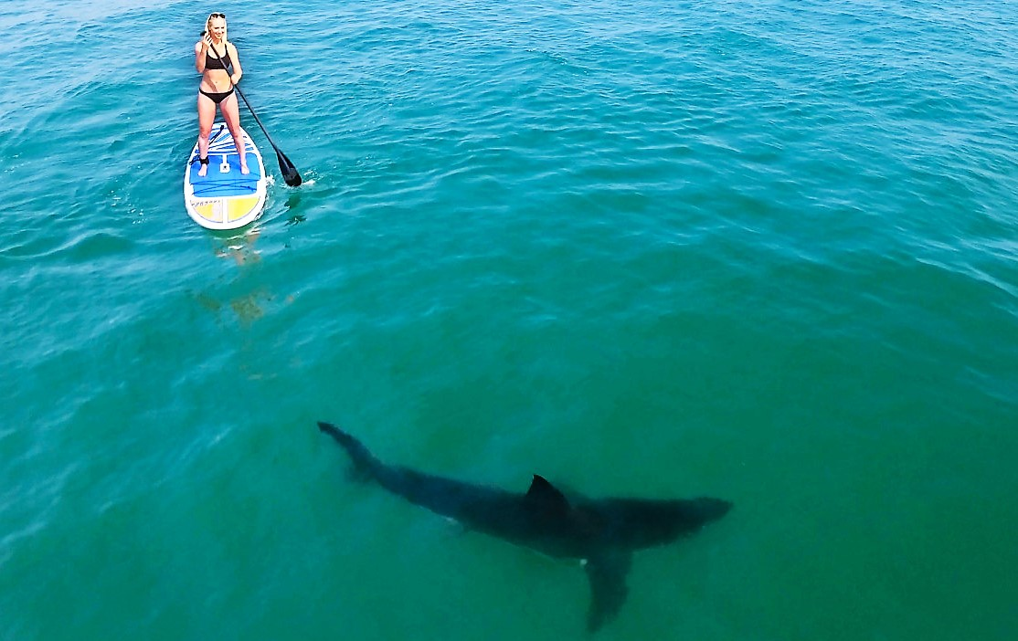 170803-paddleboarders-surrounded-sharks-02-1 (2)